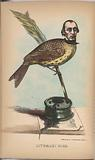 Literary Bird