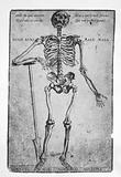 Woodcut: skeleton with right forearm