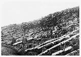 Exhibits from the Bureau Tot Bevordering van Het Kinine-Gebruik, Amsterdam: clearing virgin forest in Java