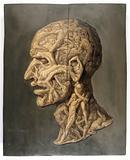 Testa anatomica