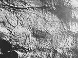 Rhinoceros, upper Palaeolithic, from a photograph