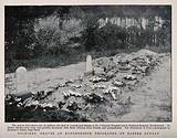 Boer War: soldiers' graves at Rondesbosch decorated with floral tributes for Easter