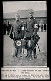 World War One: two orderlies and a working dog of the German Red Cross