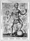 J Remmelin, 1660: male anatomy