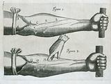 W Harvey. Exercitatio anatomica…