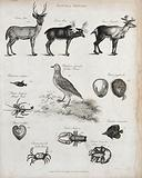Above, three deer, a fish, a golden plover (wading bird), a hermit crab and two molluscs