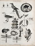 Above, three insects, a shrike, a mineral, a gull, a sprig of a camphor tree and a sprig and berry of a lantana shrub