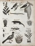 Above, a sprig and flowers of a lobelia, two grosbeaks with a nest, an earthworm, a madrepore, a manis, and a …