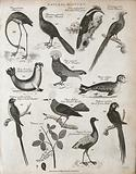 Above, a flamingo, two pheasants, a seal, a rock manakin, and a sea calf