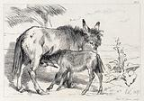 A donkey and its suckling foal