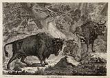 Two wild oxen or aurochs with their young in a forest