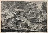 A stag and a group of deer resting near a small lake in a forest