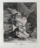 Two stone martens in a rocky landscape