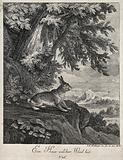 A hare standing on a rugged rock outside a forest getting wind of its environment