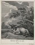 A donkey resting in a paddock