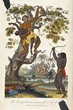 An orang-utan carrying a girl into a tree as a man shoots arrows from below