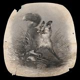 A fox in agony with its paw caught in a trap