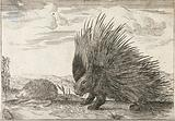 A porcupine with quills erect and a hedgehog
