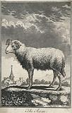 A ram standing on a hill above a village
