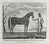 A groom holding a stallion by its reins
