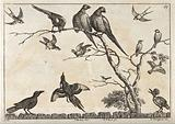 Various birds, including pheasants, swallows and a hoopoe