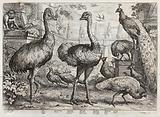 Birds and animals in a neo-classical garden: ape, cassowary, pheasant, ostrich, swallow, peacocks and peahens