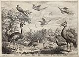Various birds round a pond: peacock, crane, toucan, parrot, teal, gambo goose, mallard duck, pelican and bird of …