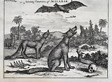 Two dogs sitting next to skeletal remains of men and animal howl at a large bat in the air
