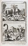 Animals from different parts of the world, including an elephant, a lynx, a camel and a jackall