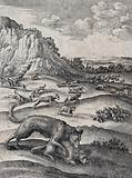 A wolf is biting a ram in the foreground while wolves are pursuing sheep in all directions in the background