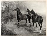 Three horses standing in a field, listening to the horn of a huntsman, who is seen with his horse and hounds in the …