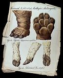 Foot of a hippopotamus, two figures, and foot of a wild pig (or boar?), three figures