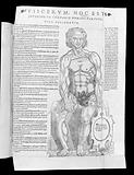 Anatomical fugitive sheet bound at the end of Valverde, Vivae imagines partium coporis humani…1566
