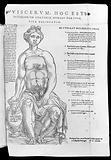 Anatomical fugitive sheet, 1566
