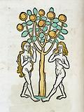 Adam and Eve under the Tree of life, woodcut 1547