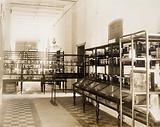 Wellcome Tropical Research Laboratories, Khartoum: museum