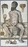 Anatomical fugitive sheet, male
