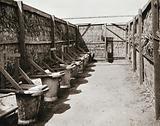Fly-proof latrines, Tel-el-Kebir, Egypt: in the Australian camp