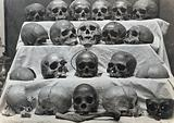 Skulls: twenty-one skulls or parts of skulls arranged in four rows