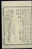 Acu-moxa chart: Stomach channel of foot yangming, Japanese