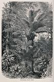 Dwarf palms in a Madagascarn rainforest