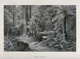 Tree-ferns in an Australian forest with two hunters in the distance