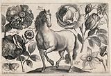 A horse surrounded by three roses, a marigold, a daffodil and a butterfly
