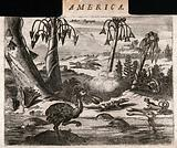 Three papaya trees (Carica papaya) with lizards, dodos and a man hunting in an exotic, tropical landscape