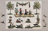 Separate pictures of garden fruit, flowers, vegetables, birds, dogs and two monkeys dressed as gardeners