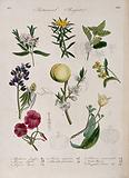 Seven plants, including a lupin and peach: flowering stems