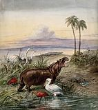 An hippopotamus, a pelican, two flamingos, two water-rats, two ostriches and a crocodile in a landscape