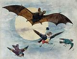 A bat and three fully dressed birds flying by moonlight