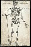 Anatomical fugitive sheets