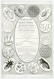 'Microcosm, A Grand Display of the Wonders of Nature' advertisement for microscopes, London, England, 1827